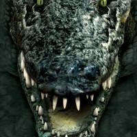 croc atyack2