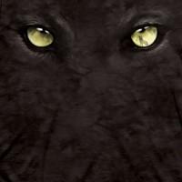 panther eyes 2